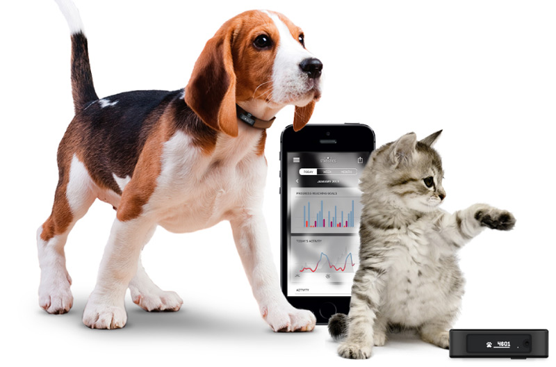 Pet Activity Tracker Helps Train Your Prized Pooch