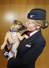 """Paws & Relax"" – British Airways' In-flight Channel Featuring Puppies and Kittens"