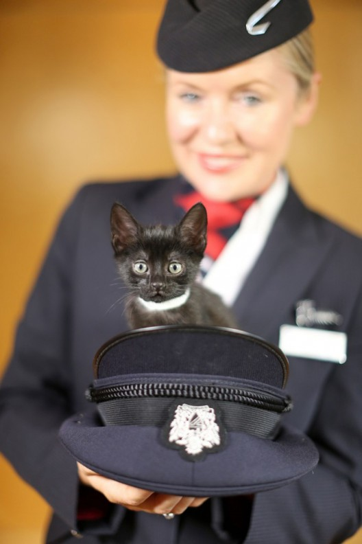 """Paws & Relax"" - British Airways' In-flight Channel Featuring Puppies and Kittens"