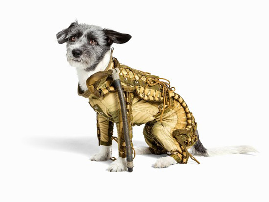 Soviet Dog Spacesuit Could Fetch $10,500 at Auction