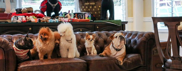 The Wagington – Singapore's First Luxury Pet Hotel And Resort