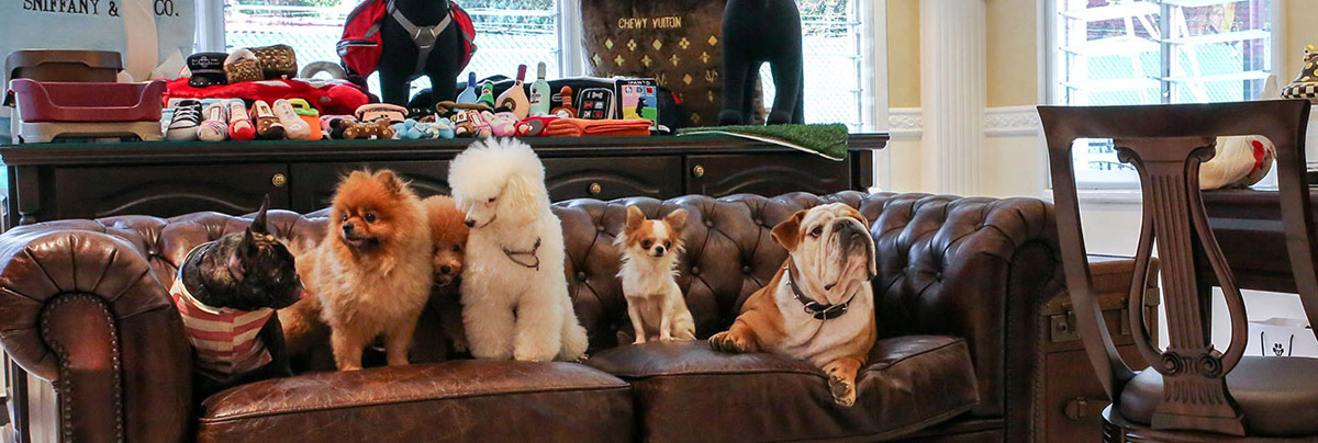 The Wagington - Singapore's First Luxury Pet Hotel And Resort