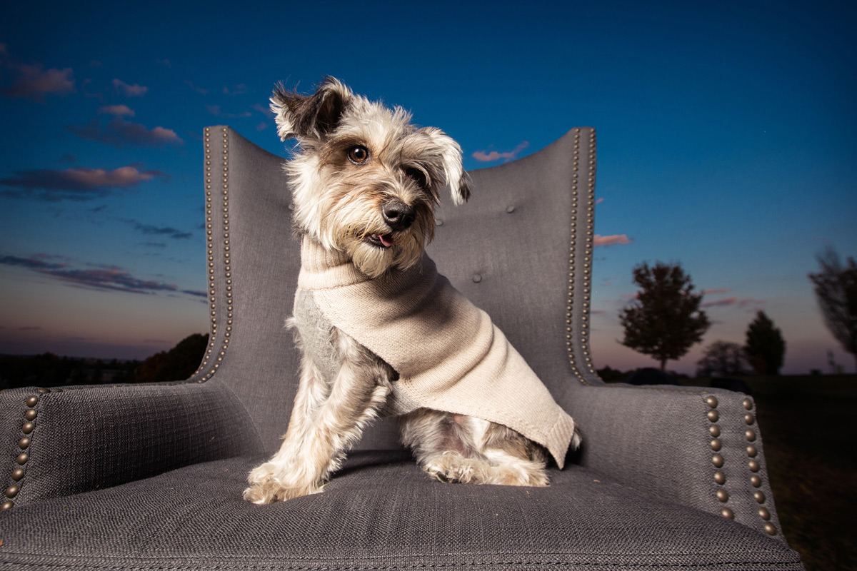Canine Royalty's New Exclusive Line of Dog Clothing