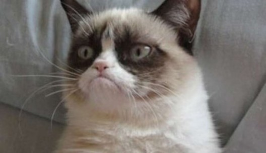 Truly Rich Cat - She's Constantly Grumpy, And So Earned €76 Million