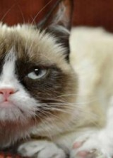Truly Rich Cat – She's Constantly Grumpy, And So Earned €76 Million