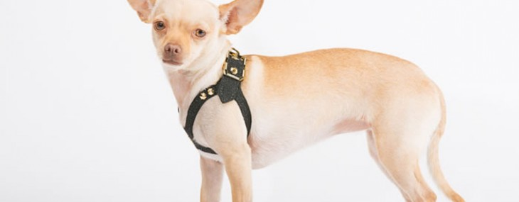 Brikk Brings Some Luxury for Dogs with Handmade Lux Dog Harness