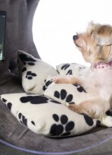 New Samsung Dream Doghouse Worth $31,000