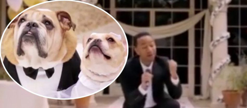 John Legend Sings At Dog Wedding For Charity