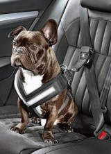 Skoda Introduces Seat Belt for Dogs