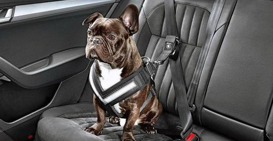 Skoda Seat Belts for Dogs