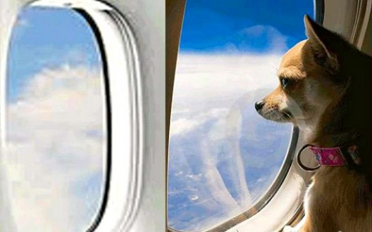 World's First Airport Terminal for Pets At JFK