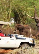 Finch Hattons – Luxury Camp At The Heart Of Tsavo National Park In Kenya