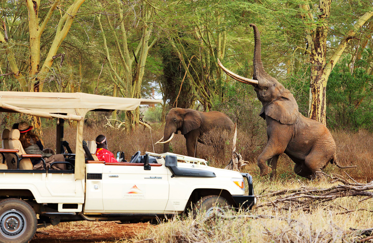 Finch Hattons - Luxury Camp At The Heart Of Tsavo National Park In Kenya