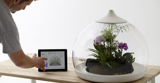 Biome Flora Terrarium That Links to Your iPad or iPhone