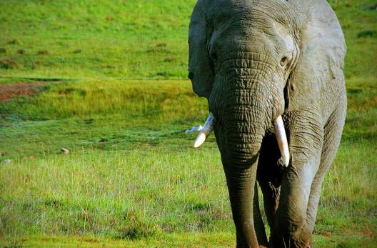 Extraordinary Journeys' Romantic African Valentine's Day Safari