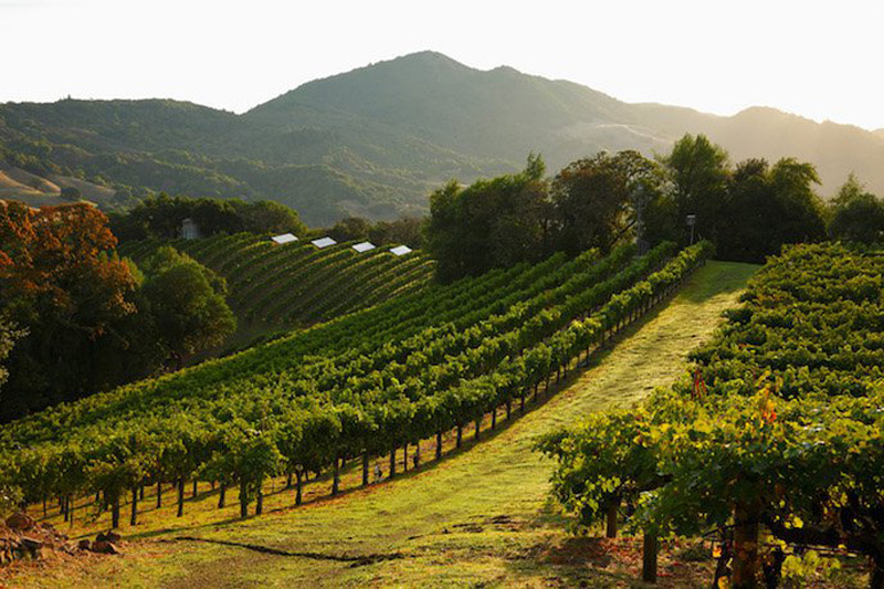 French Property For Sale With Vinyard