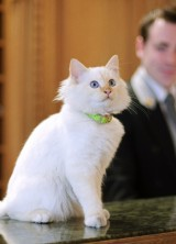 Le Bristol Hotel in Paris Has Two Feline Guardians