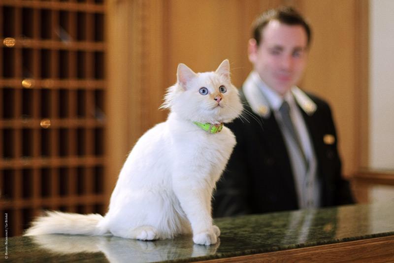 Le Bristol Hotel in Paris Has Two Feline Guardians
