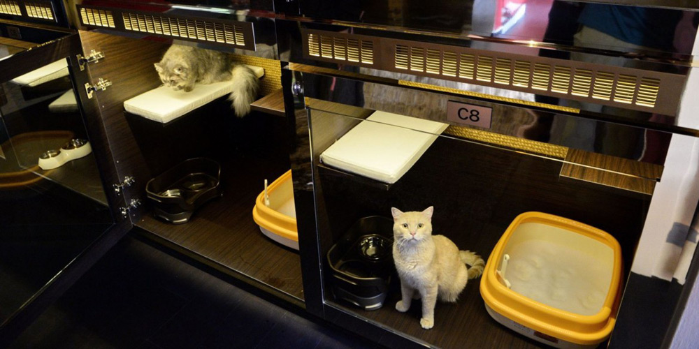 Singapore Cats Can Enjoy Swarovski Studded Bowls And Cavalli Wallpaper