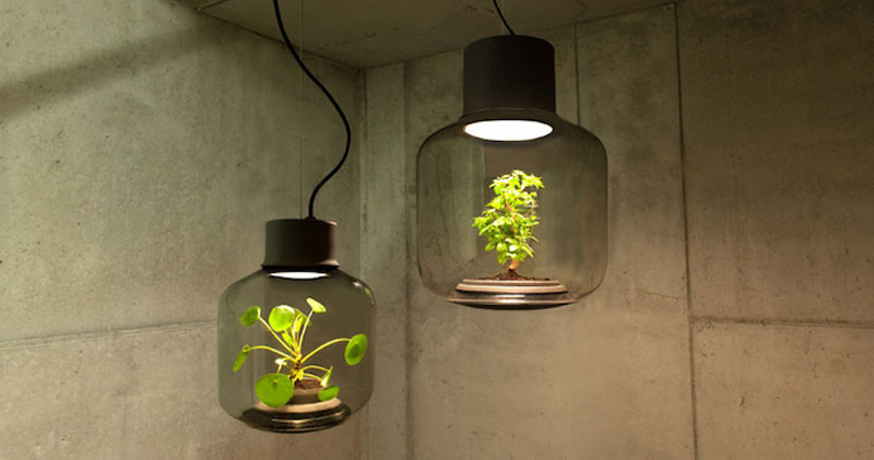 Grow Plants Lamps