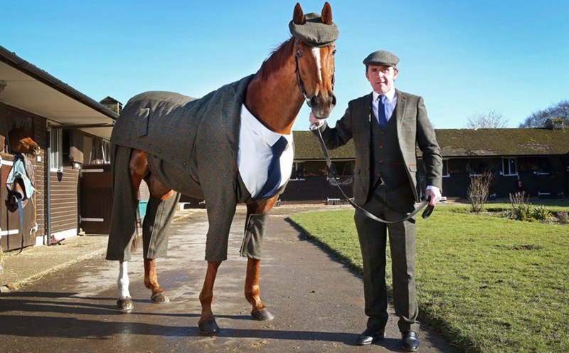 World's First Tweed Suit For Racing Horse