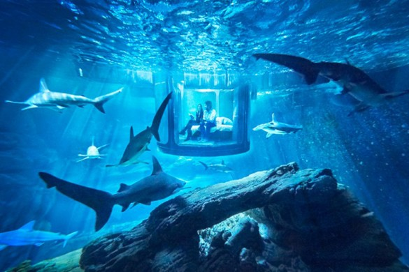Would You Sleep With The Sharks? Airbnb Offers Just That!