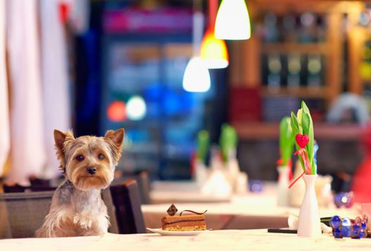Special Menu For Your Dog At London's Bluebird Restaurant