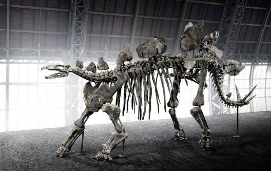 Rare 150-Million-Year-Old Stegosaurus Skeleton At Online Auction