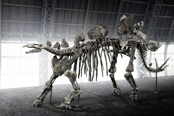 Rare 150-Million-Year-Old Stegosaurus Skeleton At Online Auction